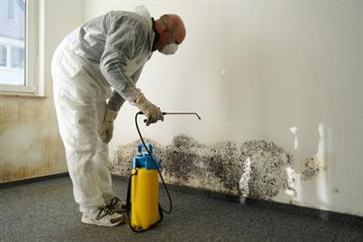 Maryland mold remediation